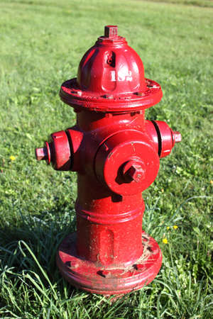 borne fontaine: A bright red common fire hydrant surrounded by green grass.  Banque d'images