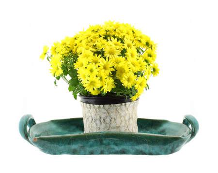 stoneware: Bright yellow garden Mum flowers on a stoneware green ceramic tray.