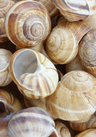 A close view of several colorful empty escargot shells.  photo