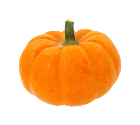 A single small pumpkin used to make the seasonal favorite pumpkin pie.  photo