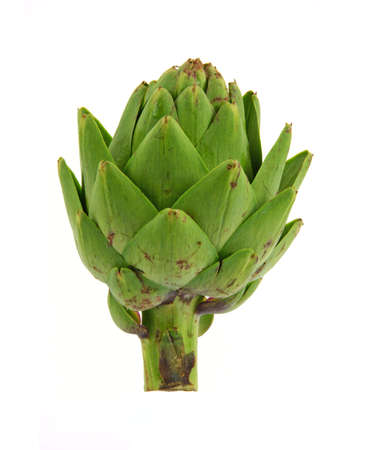 Upright view of a raw artichoke against a white background.  photo