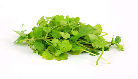 A bunch of organic cilantro on a white background.