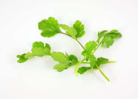 Several stalks of organic cilantro on a white background.