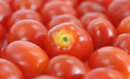 A layer of grape tomatoes with the tomato in the center in focus. Stok Fotoğraf