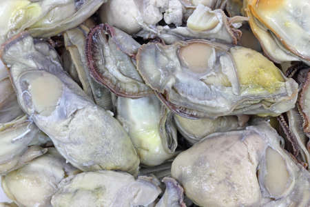 shucked: A very close view of oysters for stew.