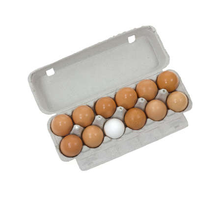 A cardboard container with eleven brown shelled eggs and one single white egg against a white background. Stock Photo - 10428700