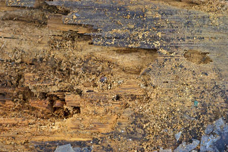 rotting: Close view of a wood board that is rotting due to insect damage. Stock Photo
