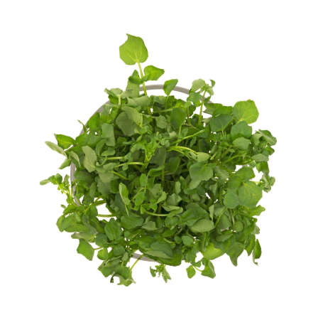 edible leaves: Top view of watercress in a glass container. Stock Photo