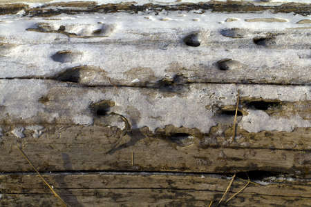 Close view of a layer of ice on an old rotting log Stock Photo - 13162315