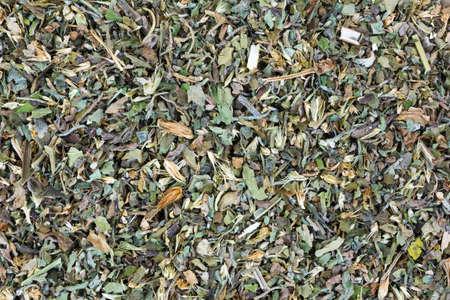 nepeta cataria: Una vista molto da vicino le erbe che compongono catnip