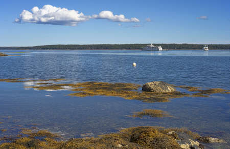 Two yachts at anchor in the distance with seaweed and rocks on the coast of Maine in the summertime