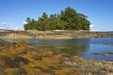 Seaweed covered rocks with an island with trees in the background against blue sky on the coast of Maine  Stock Photo