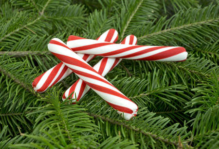 boughs: Four pieces of red and white striped candy sticks on fresh green fir boughs  Stock Photo