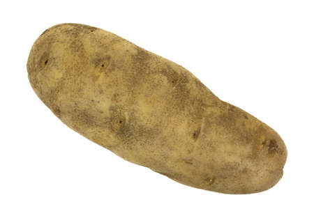 russet potato: A single russet potato on a white background