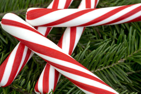 boughs: A close view of several pieces of red and white peppermint candy sticks on fresh pine boughs