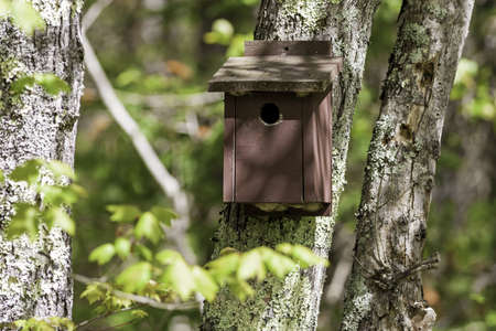 An old brown painted bird house attached to a tree with forest and foliage in the background.