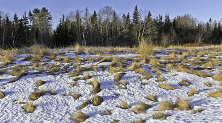 patchy: A barren piece of real estate with clumps of dried grass and patchy snow in the foreground and forest in the background.