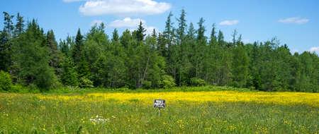 no trespassing: Una flor silvestre y el campo lleno de malas hierbas con un peque�o signo prohibido el paso