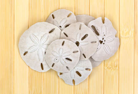 A group of old sand dollars on a wood slat background