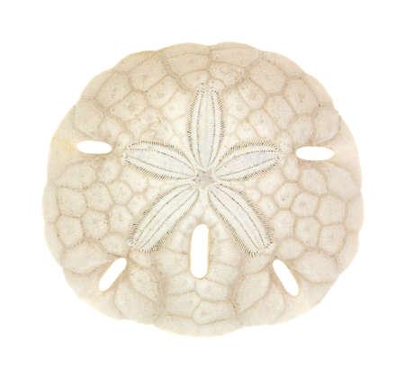 sand dollar: Un solo d�lar de arena de edad en un blanco