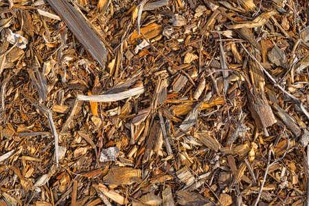 paillis: Une vue d'arbres d�chiquet�s pour paillis. Banque d'images