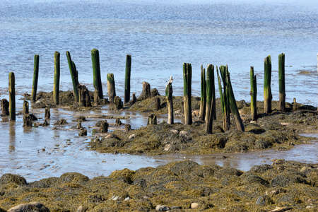 thriving: The remains of the pier in the once thriving seaport at Stockton Springs, Maine  Stock Photo