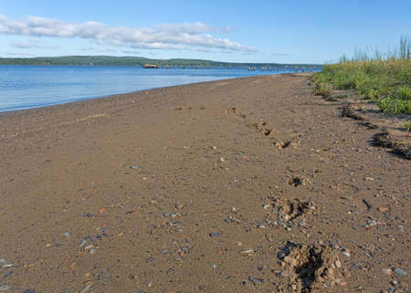 Dog footprints leading into the distance on a gravel beach at Sandy Point in Stockton Springs Maine with the Penobscot River in the background.