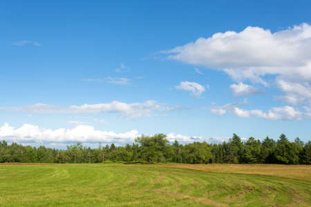 farm field: A rural farm field in Maine that has been partially mowed with distant trees and cloudy skies.