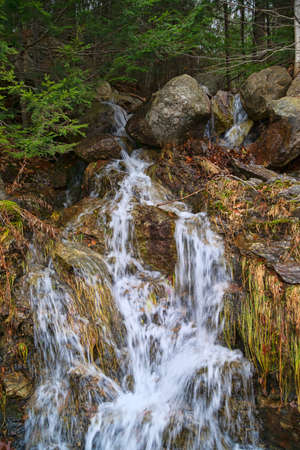 runoff: Gentle flow of a natural water runoff from a forest onto rocks. Stock Photo