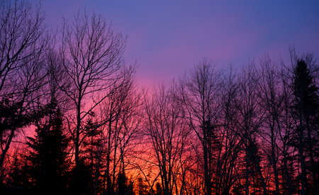 winter blues: Red sky in the morning, sailors warning.  A deep red cloudy sky at dawn behind tree line in the foreground. Stock Photo