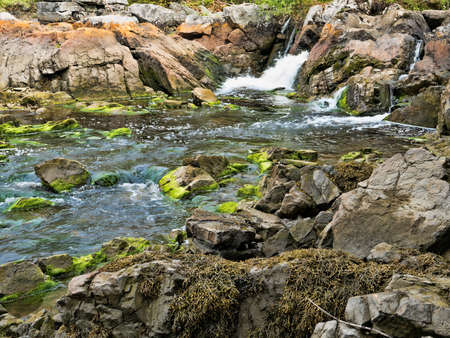 salt water: A fresh water stream gushing into salt water with large boulders and rocks covered with algae and seaweed.