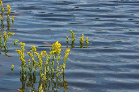 salt water: Several groups of weeds in salt water.