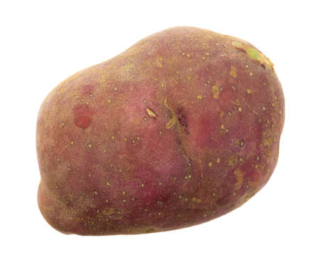 organically: An organically grown red potato isolated on a white background.