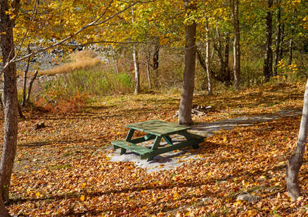 A green painted picnic table in a secluded area with a footpath and a tremendous amount of fall leaves in rural Maine. Stock Photo