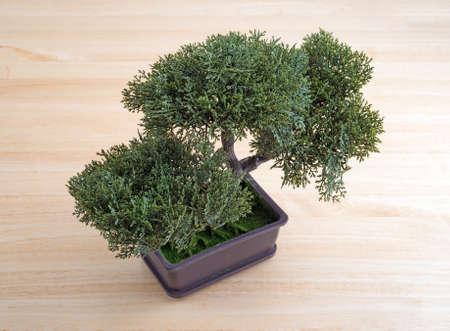 bonsai tree: A small plastic bonsai tree on a wood table top.