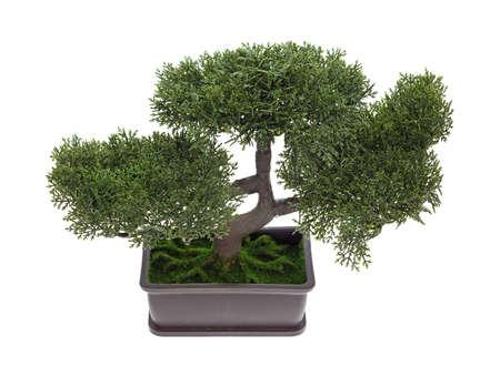 bonsai tree: A small plastic bonsai tree isolated on a white background.