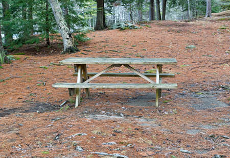 pine needles: A wood picnic table in a secluded park setting with pine needles covering the ground in the early spring.