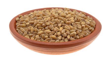 winter wheat: Side view of a small bowl filled with red winter wheat berries isolated on a white background.