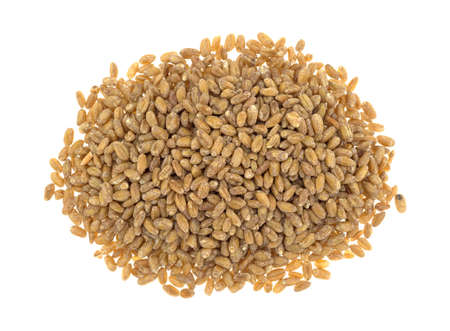 winter wheat: Top view of a portion of red winter wheat berries isolated on a white background. Stock Photo