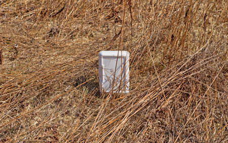 throwaway: A foam food container as litter in dried grasses in the late springtime.