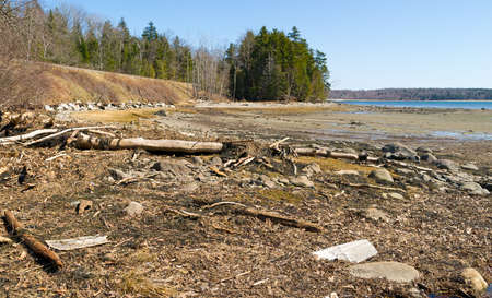 spring tide: Debris washed into the head of Long Cove at Searsport Maine.