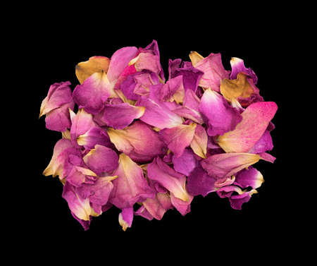 withering: Rose petals withering and dying on a black background. Stock Photo