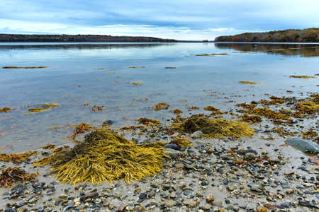 View of the rocky and muddy shoreline at low tide on the coast of Maine in the late fall.