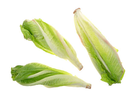 romaine lettuce: Top view of three heads of romaine lettuce isolated on a white background. Stock Photo