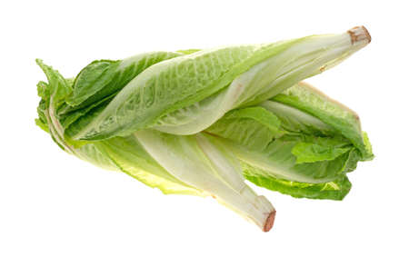 Three heads of romaine lettuce isolated on a white background. Stock Photo