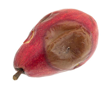 overly: A single rotting red pear isolated on a white background. Stock Photo