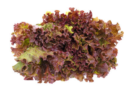 A bunch of red leaf lettuce front view isolated on a white background.
