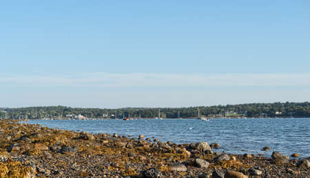 Distant view of the boats moored at Belfast, Maine at low tide with seaweed covered rocks in the foreground.
