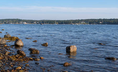 View of the boats moored at Belfast, Maine at low tide with seaweed and barnacle covered rocks in the foreground.