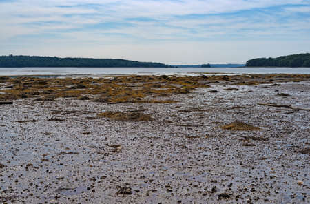 Mud flats and the low tide coastline in the foreground at Searsport Maine in the summertime with a distant view of Sears Island, the causeway and Kidder Point
